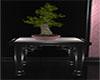 RH Lounge Sakura bonsai