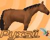 Bay Horse (pet)