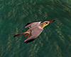 e Seagulls