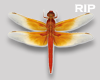 R. Dragonfly animated