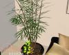 ID: Noir potted plant