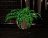 Patriotic Plant 2