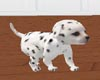 *Dalmation Cuddle Pup