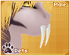 [Pets] Kaisila | teeth M