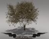 Fan Yin Tree