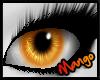 -DM- Bald Eagle Eyes