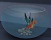 Cute fish fishbowl