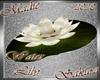 !a Sakura Water Lily