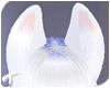Foxy | Ears 7