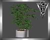 CTG INDOOR PLANT V3