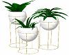 Gold Planters Plants