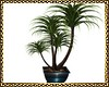 [P] Plant B Kendji