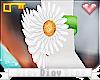 *D* Daisy's Arm Daisies