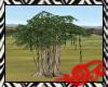 Safari Baobab Tree