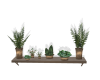 Wall Plants Shelf