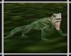 Jungle Iguana