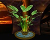 P9)Beautiful Plant Water