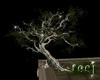 {RJ} Old Oak Tree