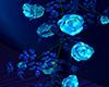 ! Blue Romantic Rose Vin