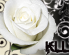 [KLL] White Elegant Rose