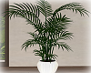 [Luv] IH - Plant