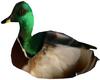 Native Animated Ducks