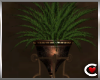 Moroccan Plant