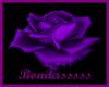La Rosa Purpura
