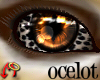 Wild.Eyes Ocelot (m)