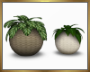 Set of 2 Plants