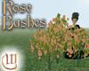 Rose Bushes - Pink
