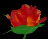 LW - 7 Roses #3