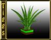 *M Coyote Plant