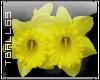 daffodills sticker