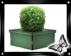 !! Potted Care Plant