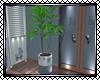 Boy Birth Plant