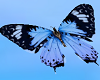 Dark Blue Butterflies