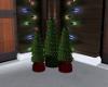 Christmas Trees Lit
