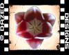 !Tulip sticker