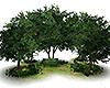Animated Tree Garden