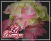 Hydrangea Pink A