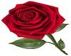 Rose Dance Marker