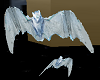Flying Ghost Bats M/F