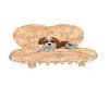 Brie puppy