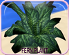 MLM Paradise Beach Plant