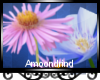 AM:: Spring Flowers Enh