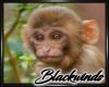 Monkey Bamboo Pic V.3