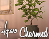 Charmed Tall Plant
