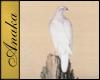 AT - Oriental White Hawk