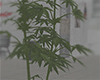 A Weed Pot